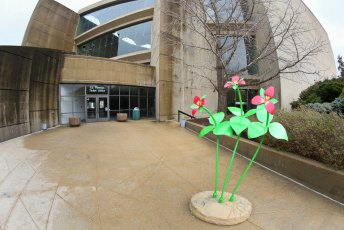 Red Trillium outside E.J. Thomas Hall on the University of Akron campus