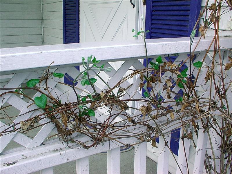 Pruning (4/4)