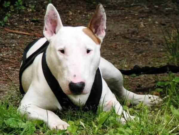 Самые опасные породы собак - Фото Животные