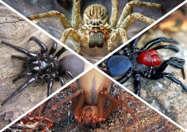 ТОП 12 Самые Опасные Пауки в Мире – Фото Животные