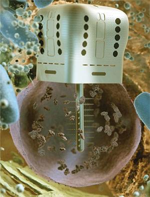 chromallocyte
