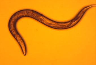 elegans-vitrified-food-coloring
