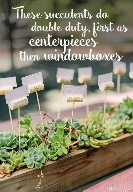 these succulents do double duty, first as centerpieces, then as windowboxes