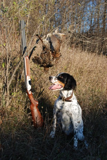 A proud bird dog.