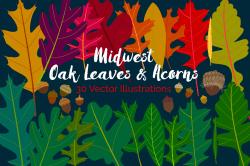 Midwest oak leaves and acorns.