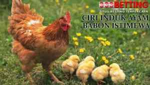CIRI-AYAM-BANGKOK-BABON-ISTIMEWA