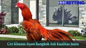 Ciri-Khusus-Ayam-Bangkok-Asli-Kualitas-Juara