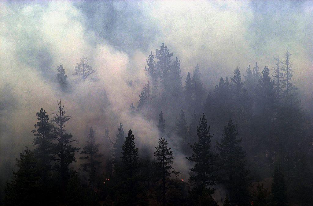 Sequoia Burning