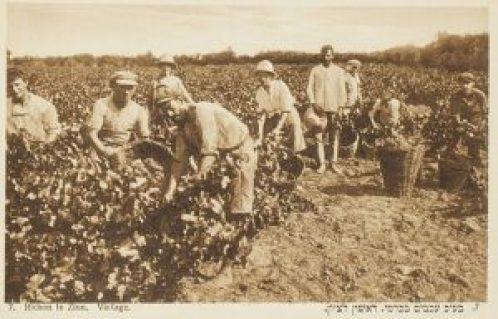 Booklet_of_postcards__Richon-le-Zion_et_Zicron-Jacob,_Palestine,_ca.1900_(CHS-47571~15) rogne