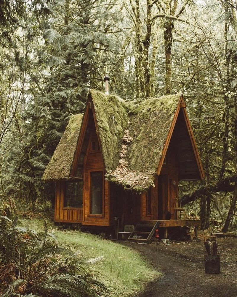 Treehugger / christian yonkers forests cover nearly a third of all land on earth, providing vital organic infrastructure for some of the. Forest Tiny House Living