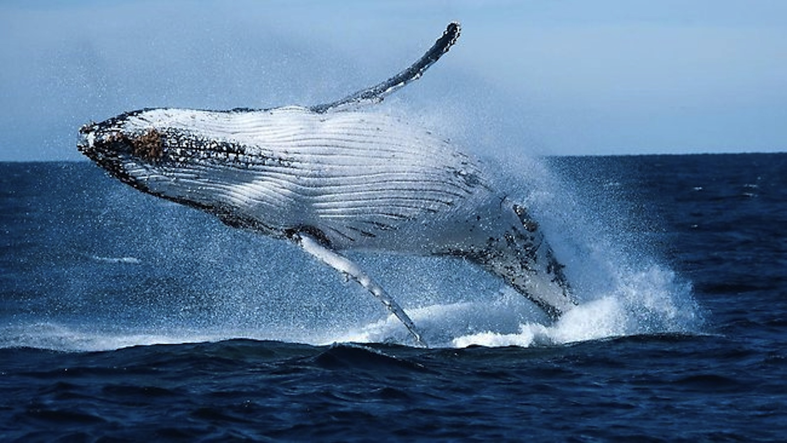 Norway Continues Whale Slaughter with 2021 Hunting Quota