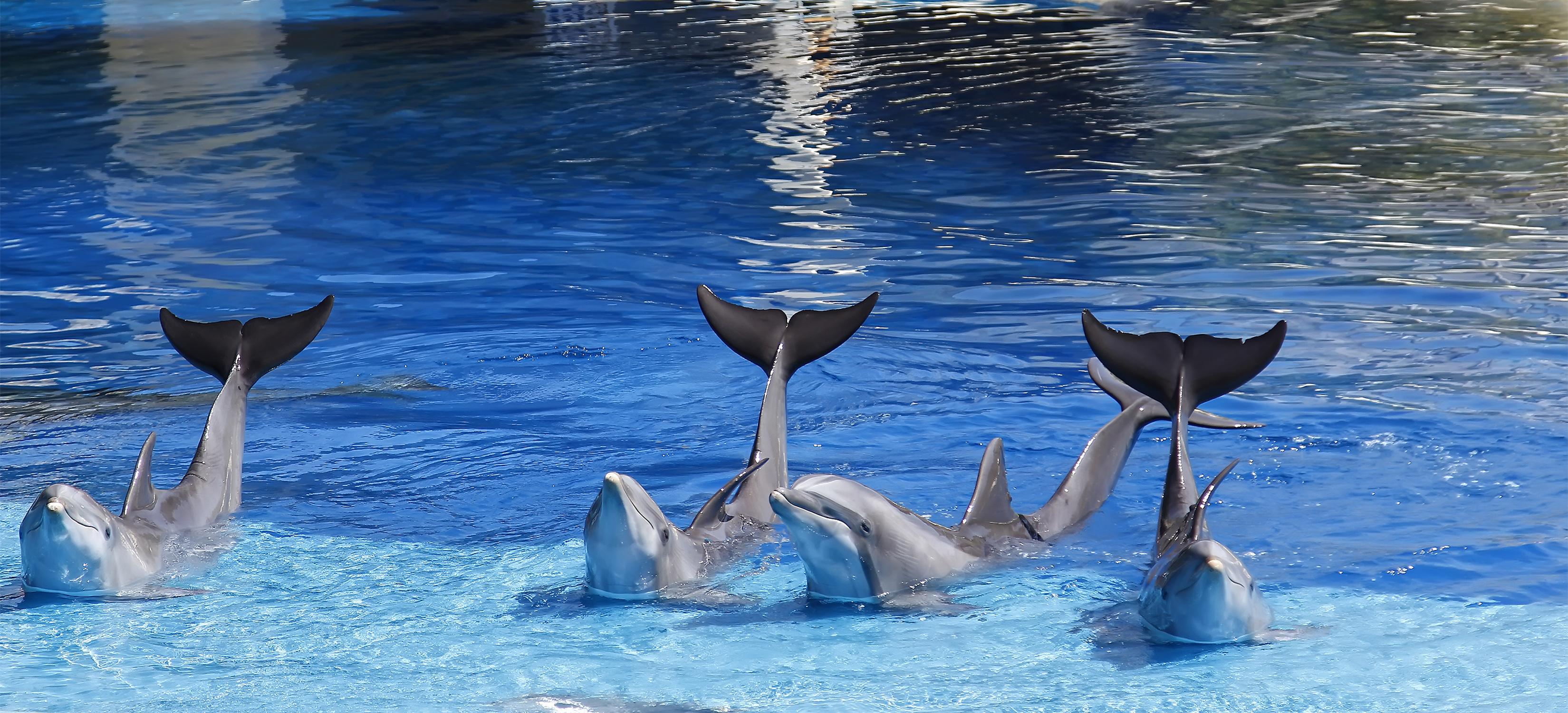 Captivity Kills! False Killer Whale Kina is the 141st Cetacean to Die at Sea Life Park Hawaii