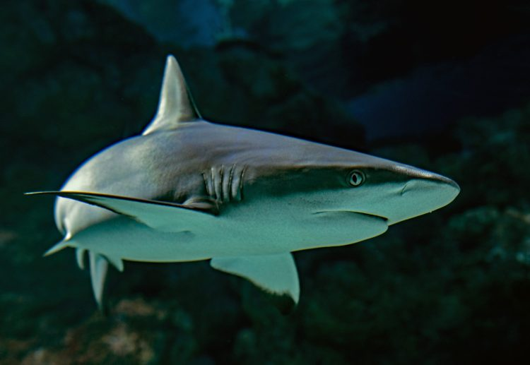 Win! House Passes Shark Fin Sales Elimination Act