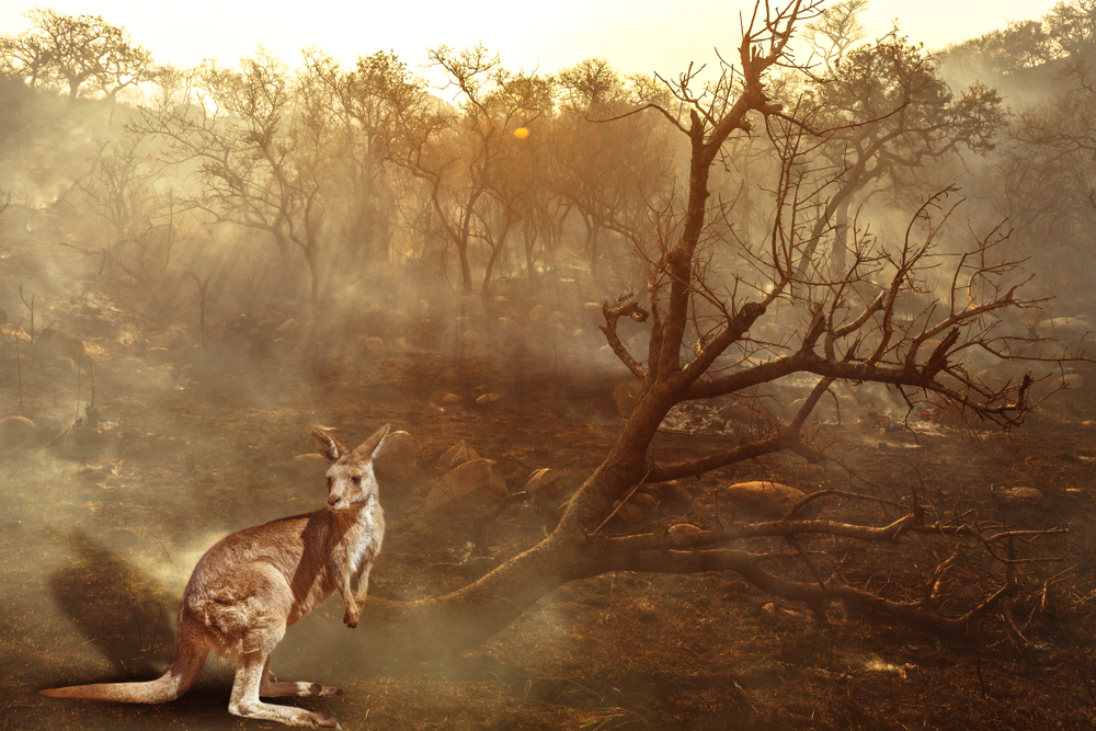 "113 Animal Species Identified as Needing ""Urgent"" Help After Record-Breaking Australian Fires"