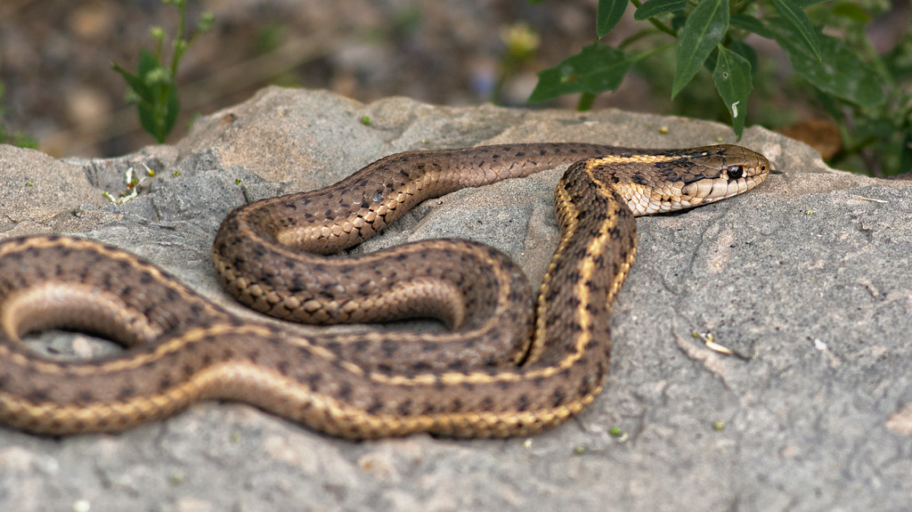 3 Reasons a Snake in the Yard Might Be a Good Thing