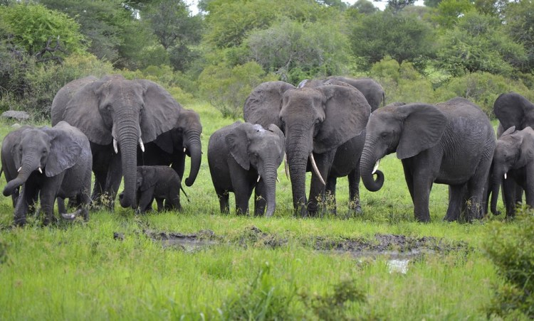 How People Are Peacefully Mitigating Human-Wildlife Conflict