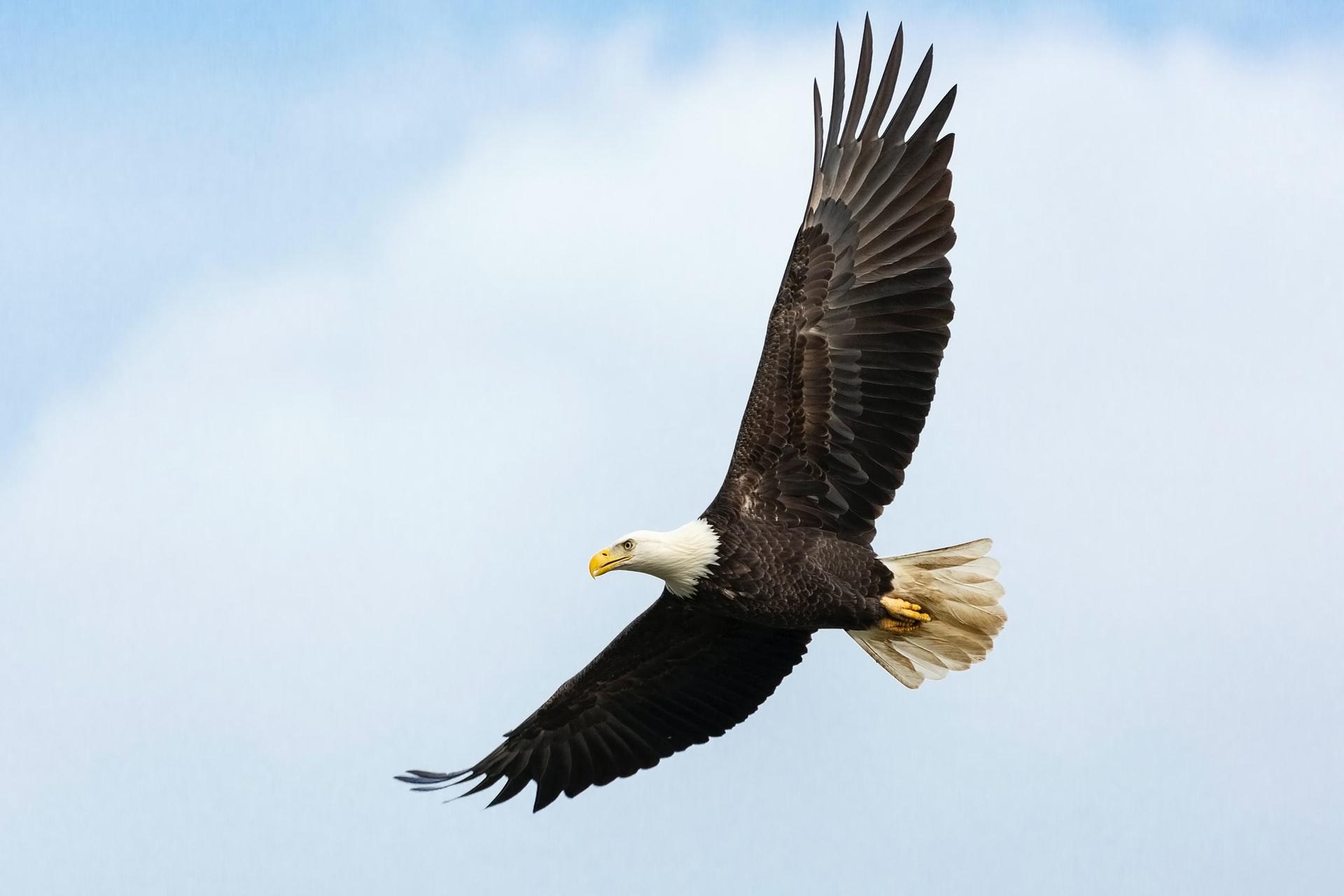 Wildlife Center Releases Rehabbed Bald Eagle