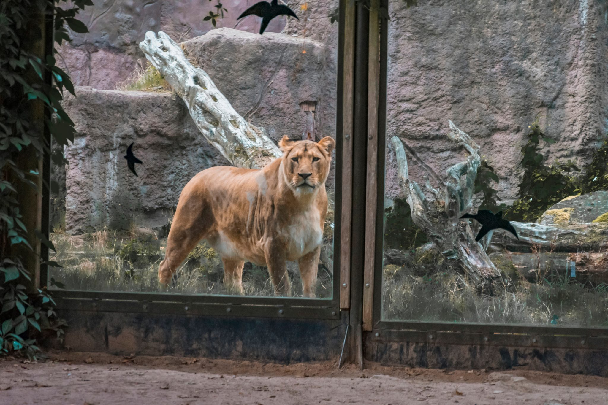 Are Zoos Vital for Education or Conservation?