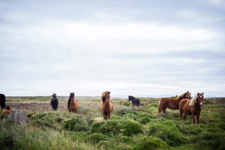 Bureau of Land Management Removes Over 600 Wild Horses from Colorado
