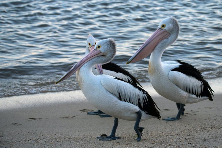 Charlotte County Birds Falling Ill from Dangerous Red Tide Toxins