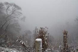 雪の弥彦山3