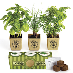 Eco Planter Herb Garden Set