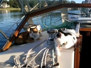 chabot cats (2)