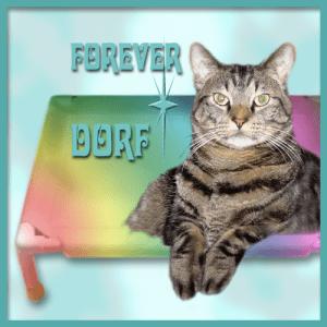 Forever, Dorf