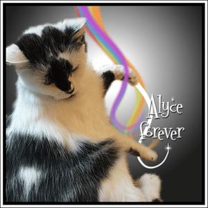 Alyce, Forever