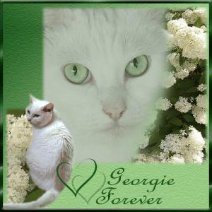 Georgie, FOREVER