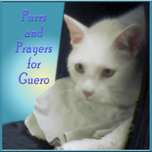 Purrs for GUERO