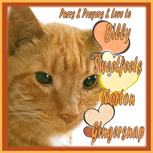 Purrs N Prayers BADGE for BILLY SWEETFEETS