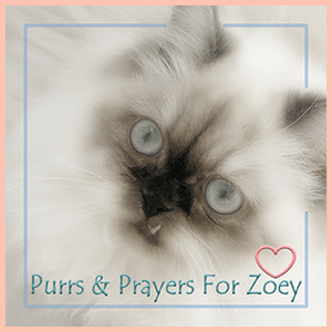 Purrs and Prayers for ZOEY, Zoolatry BADGE