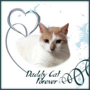 Daddy-Cat-Forever