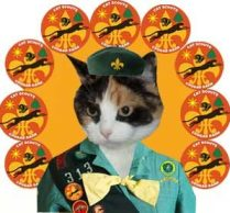 Guest Post By Cats Scouts Maggie And Felix Http15andmeowing