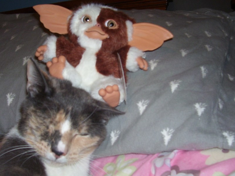 Friendly Fill ins Archives   http   15andmeowing comhttp     Joanie is having a little trouble taming her Gremlin