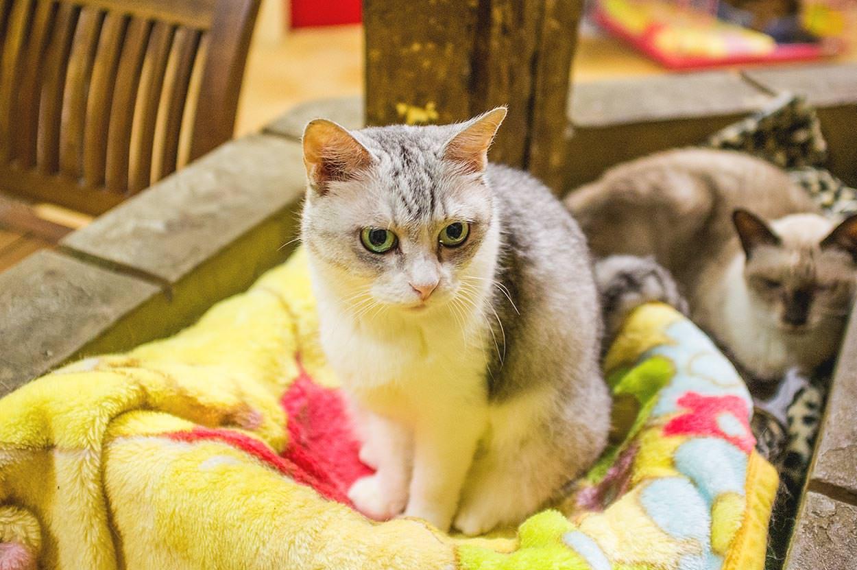 ผลการค้นหารูปภาพสำหรับ cat japan