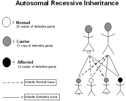 autosomal_recessive_inheritance