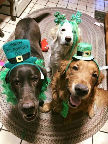 Bean, Maggie & Q in St. Patricks gear