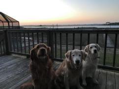 Bean, Trooper & Q sitting on deck at sunrise