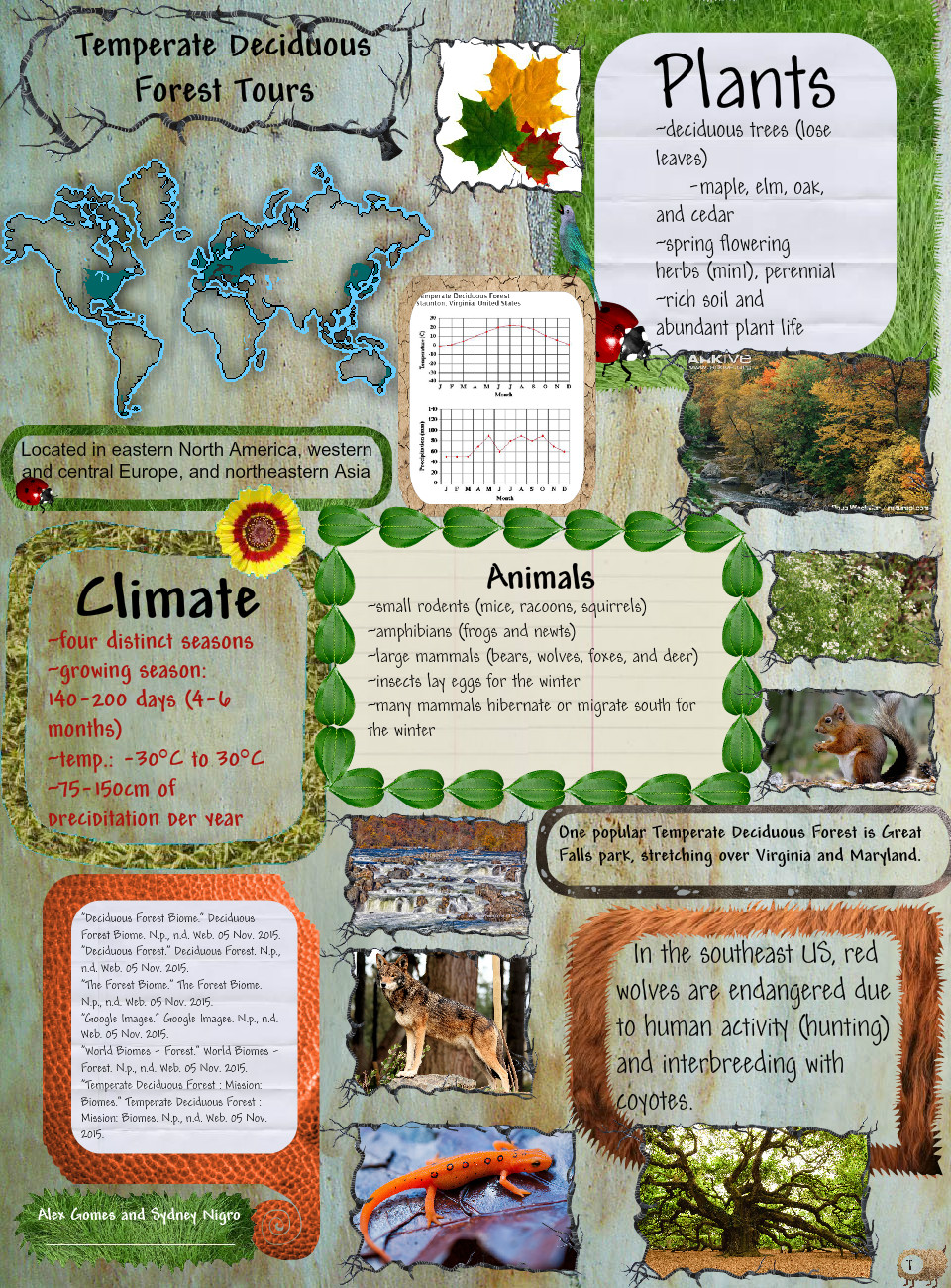 The biome covers parts of korea, china, russia, and japan. Temperate Deciduous Forests Deciduous Ecosystems Eng Forests Temperate Glogster Edu Interactive Multimedia Posters