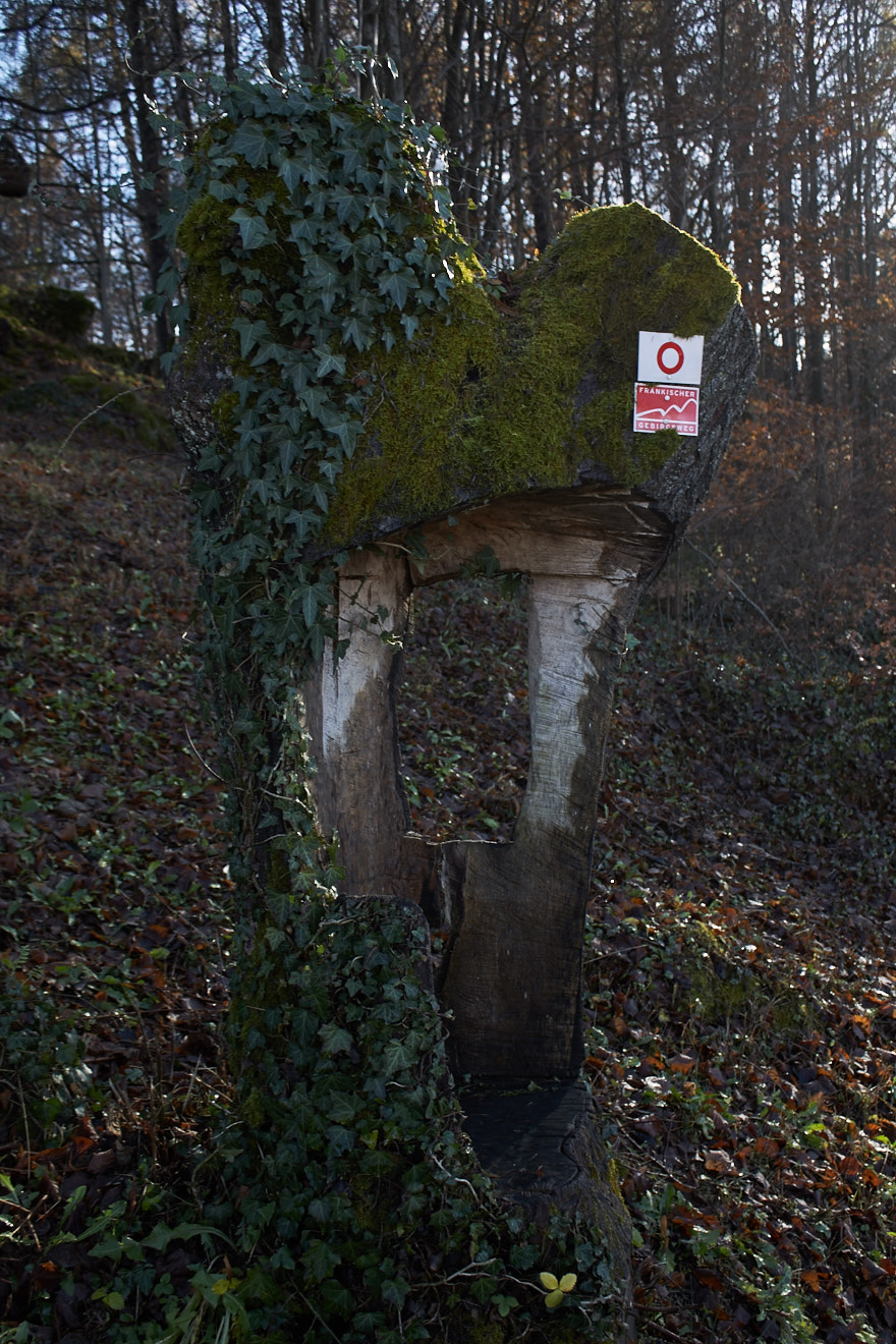 """Betzenstein Sitzplatz im Baumstamm mit Markierung """"Roter Ring"""""""