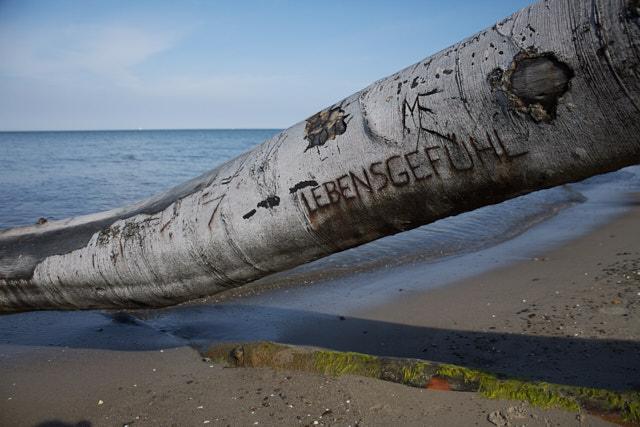 """Jahresrückblick 2016: Umgekippter Baum am Strand mit dem eingeritzten Wort """"Lebensgefühl"""""""