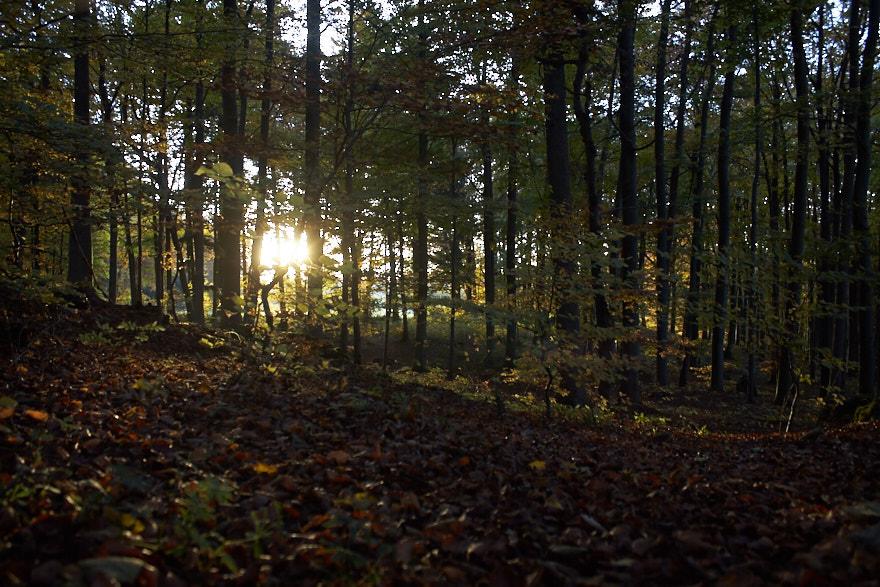 Sonnenaufgang am Glatzenstein Wald