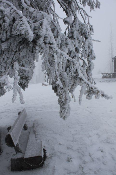 Winter_Verschneiter Ast