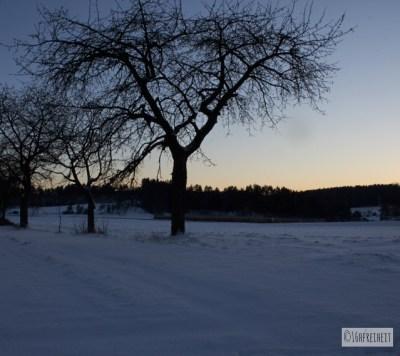 Baum in der Abenddämmerung