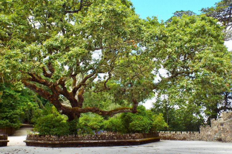 photo of large tree in a park in Lisbon, Portugal