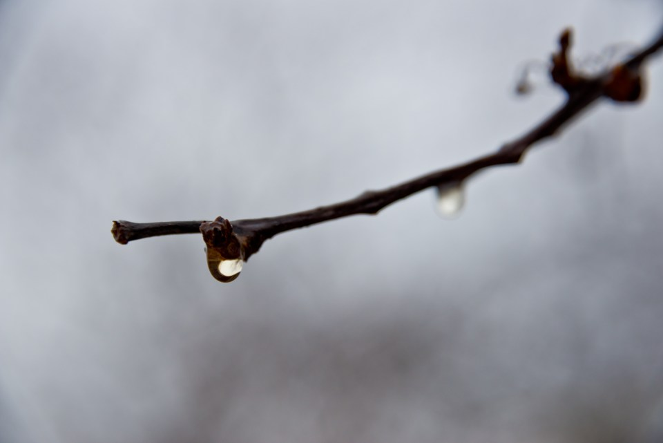Drop of Mist on a Branch