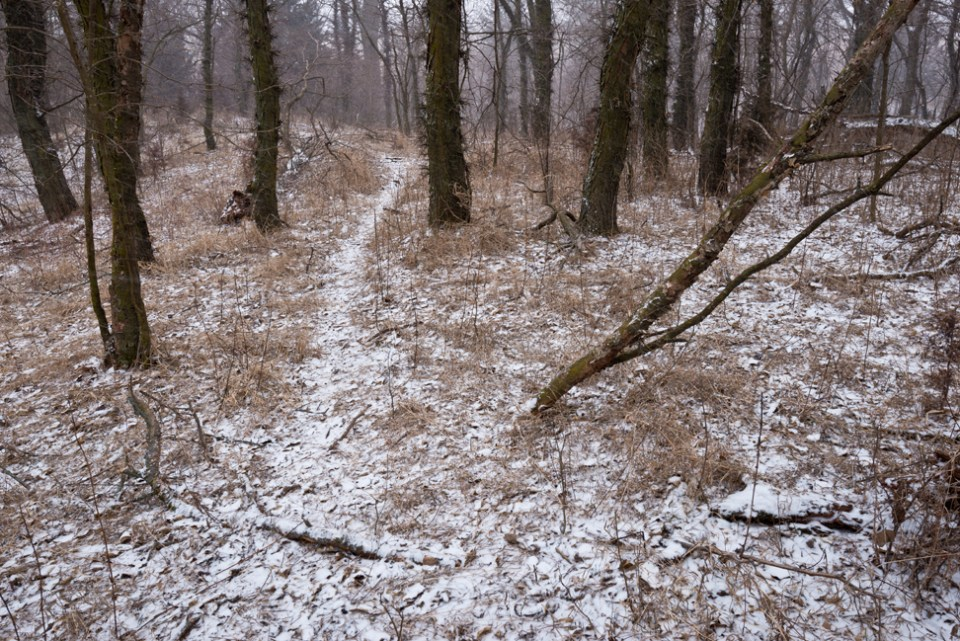 Game Trail Through the Locust Trees - Snow Storm Coming