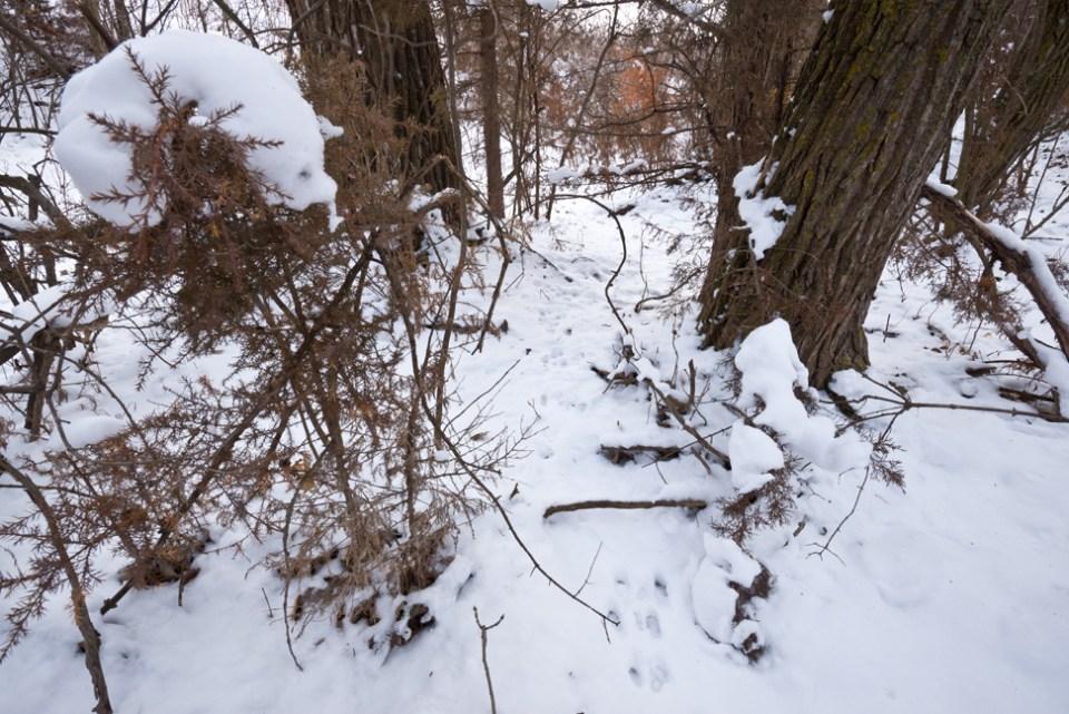 Second Snow East Branch Draw - Rabbit Tracks